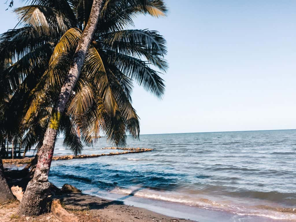 palmboom aan strand, Livingston