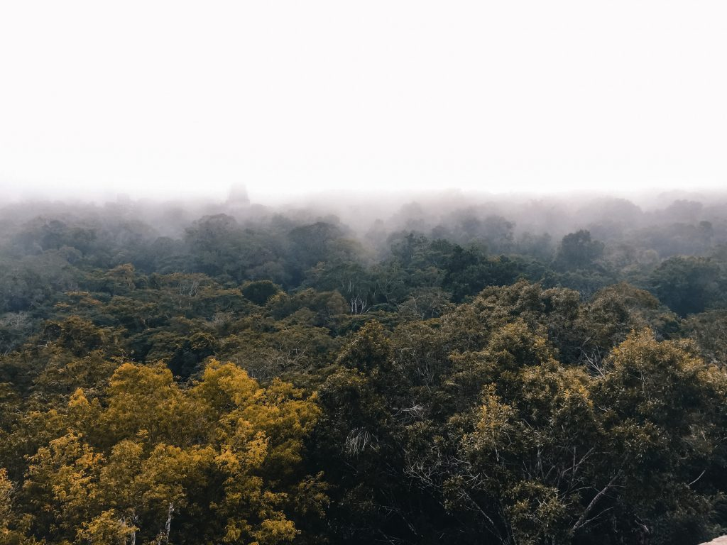 Tikal bij zonsopkomst