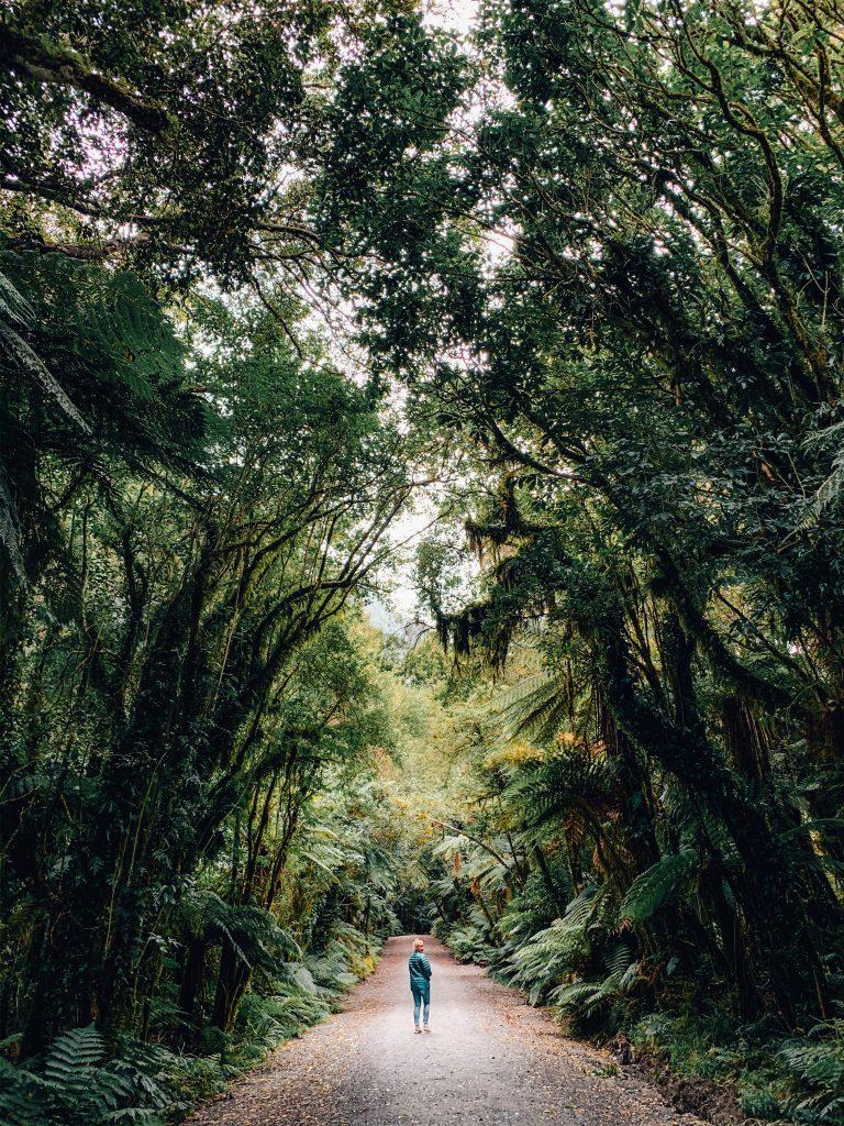 hiker in woods at franz joseph